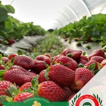 Leader-Frutta-Giarre (7)