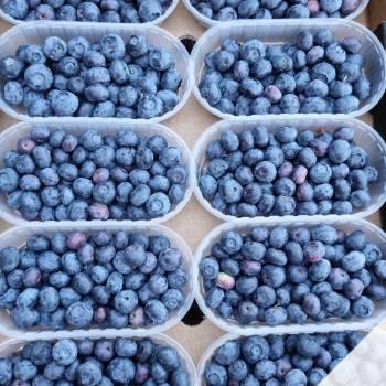 Leader-Frutta-Giarre (80)