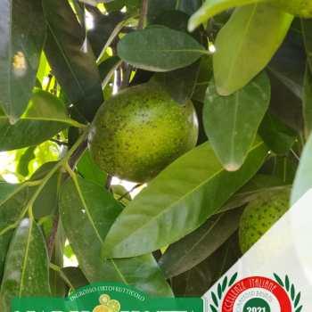 Leader-Frutta-Giarre (85)