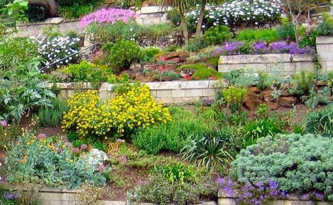Couvresols et talus  Vente plantes couvresol et plantes pour talus prix pas cher  Leaderplant