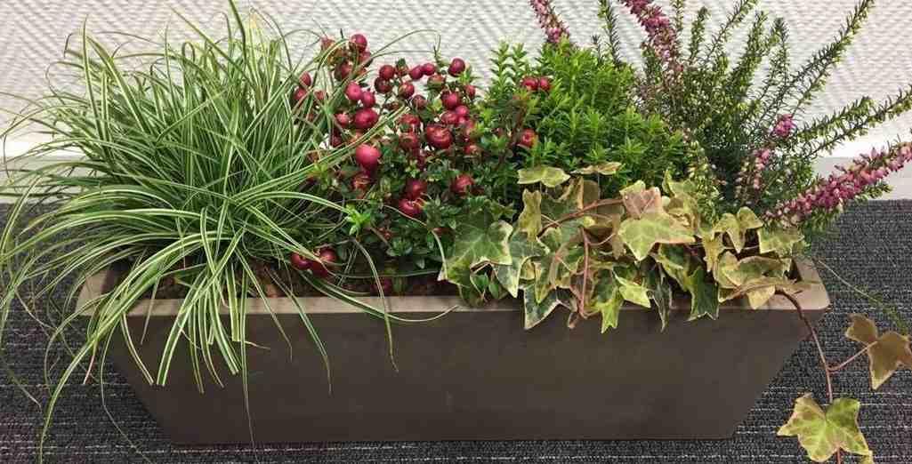 realiser une jardiniere d hiver decorative