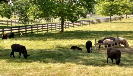 Sheep and attracted to the shade which acts as a dynamic attractor.