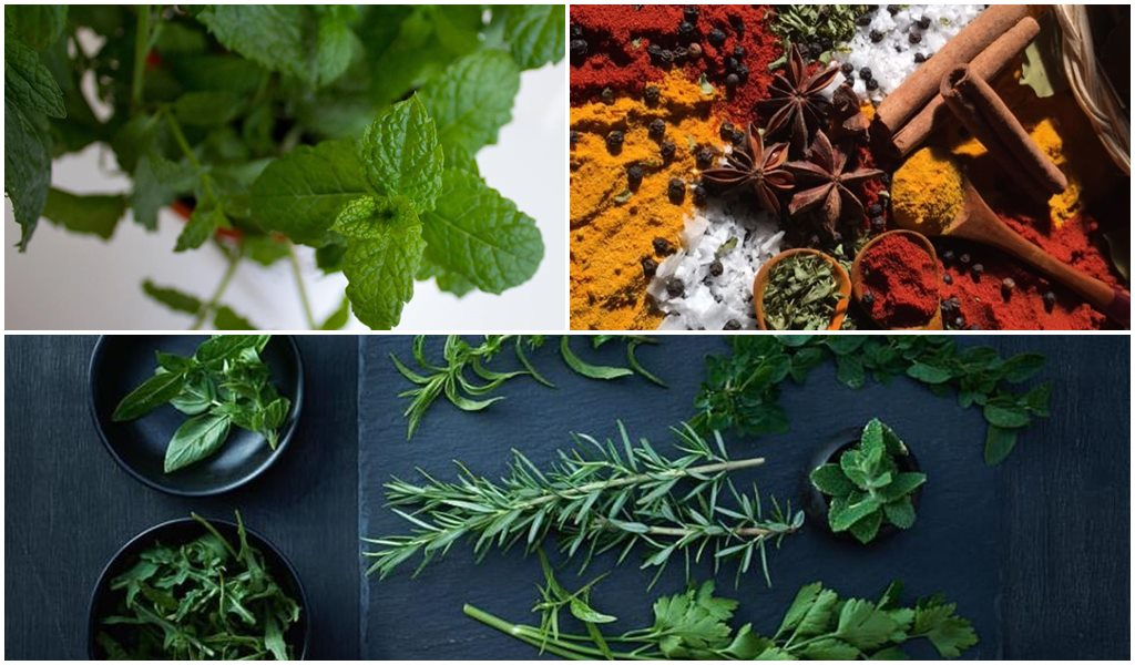 Aquaponics herbs That improve liver health
