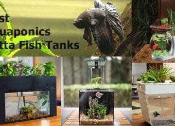 Best Aquaponics Betta Fish Tanks