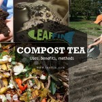 Compost tea guide