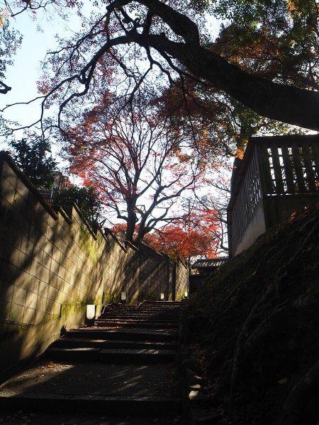 京都・紅葉速報2018!【第3弾】嵐山エリア ただいま6〜8割色づき ...