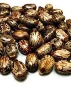 Buy castor Seeds Online