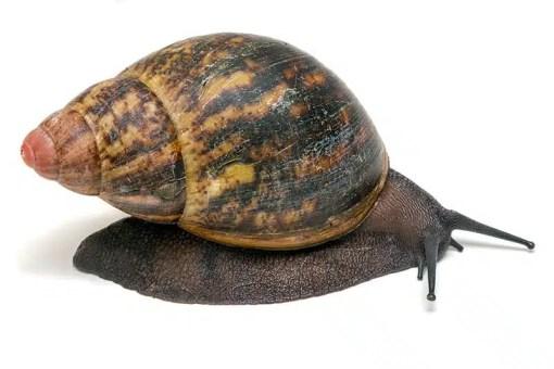 Buy Snails online