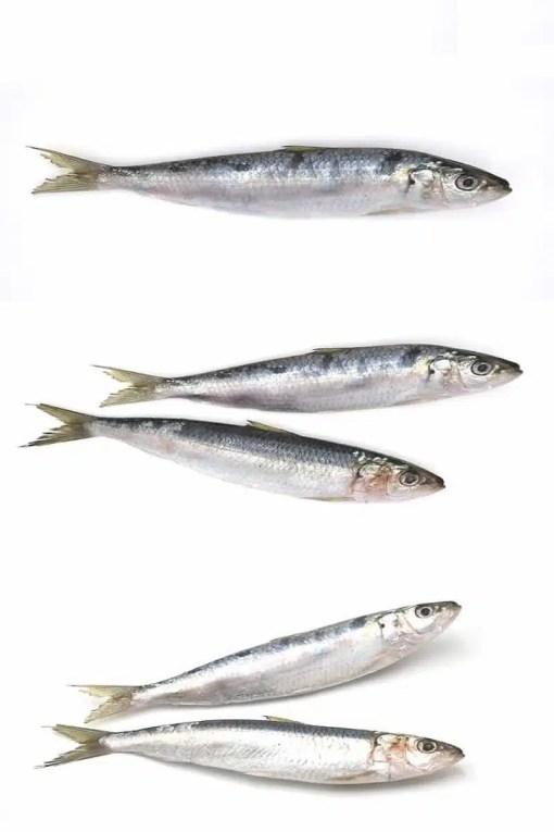 sardine for sale