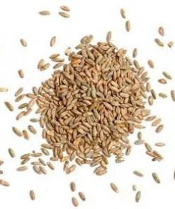Buy Organic Rye Grain Online