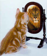Photo Orange Kitten Sees Lion in Mirror