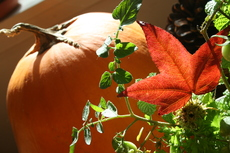 Photo Stars of Fall; Pumpkin & Fall Foliage by Colleen Proppe