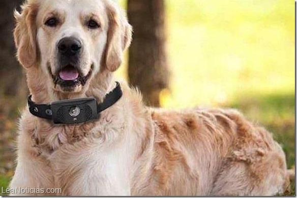 motorola-smartphone-perros--644x362