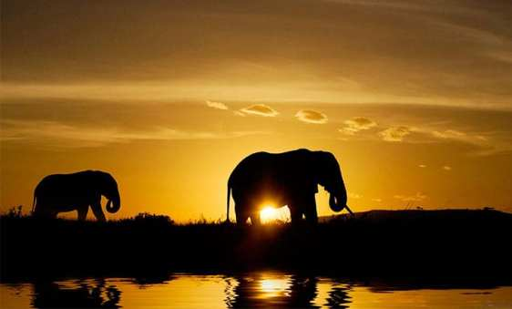africa-elephants Why Jack Dorsey believes Africa is the next big bitcoin playground?