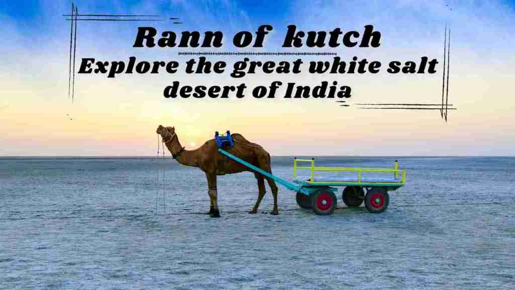 Why You Should Travel the Rann of Kutch: Explore the Largest Salt Desert of India