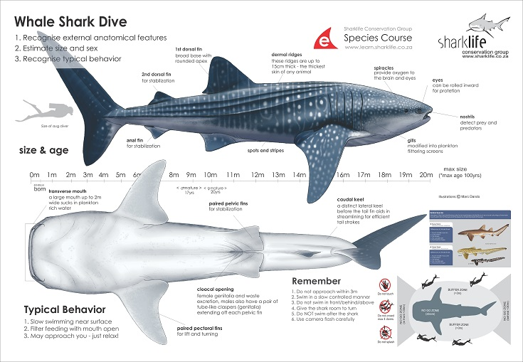 great white shark anatomy diagram car door lock parts briefing bannners : whale banner