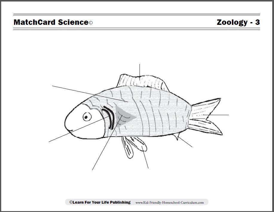 Zoology Curriculum