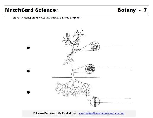 parts of a flowering plant diagram level 0 production schedule science worksheets
