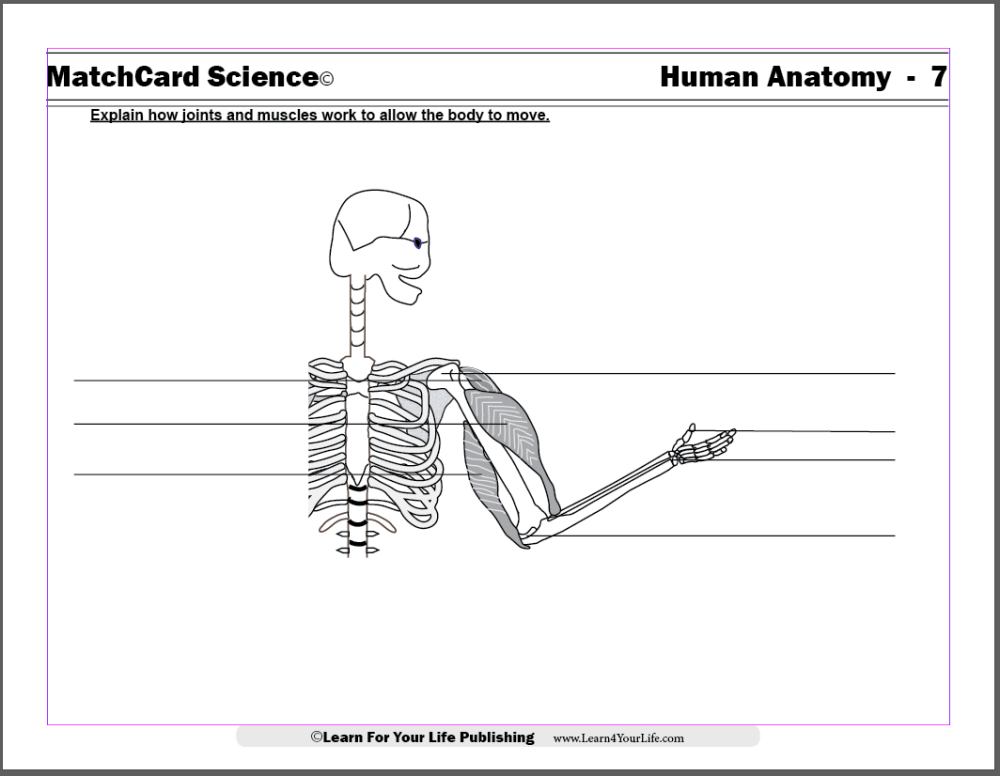 medium resolution of Anatomy for Children