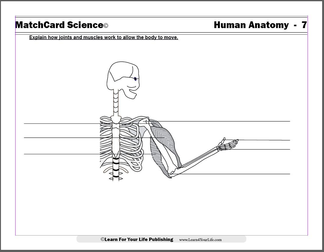 hight resolution of Anatomy for Children