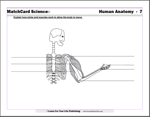 small resolution of Anatomy for Children
