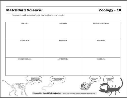 small resolution of animal worksheet: NEW 190 ANIMAL CLASSIFICATION WORKSHEET