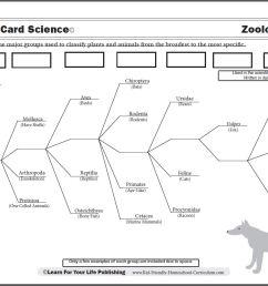 Scientific Classification Worksheet [ 862 x 1110 Pixel ]