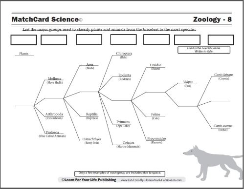 small resolution of Scientific Classification Worksheet
