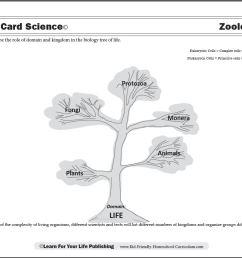 Zoology Curriculum [ 859 x 1107 Pixel ]