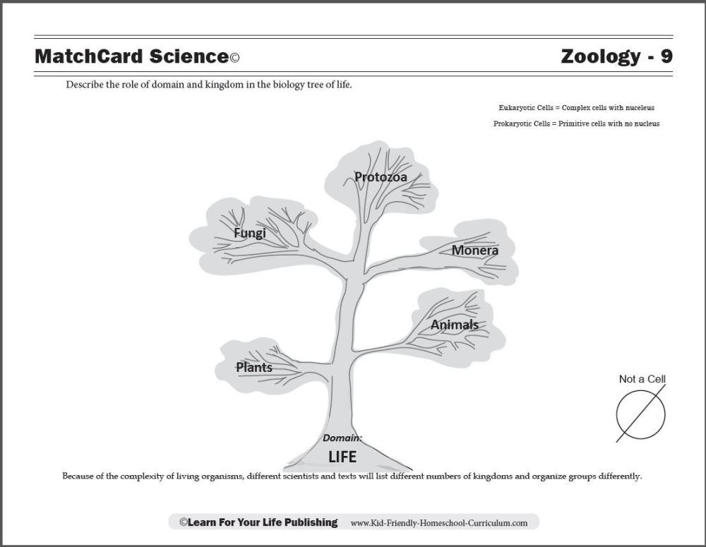 medium resolution of Zoology Curriculum
