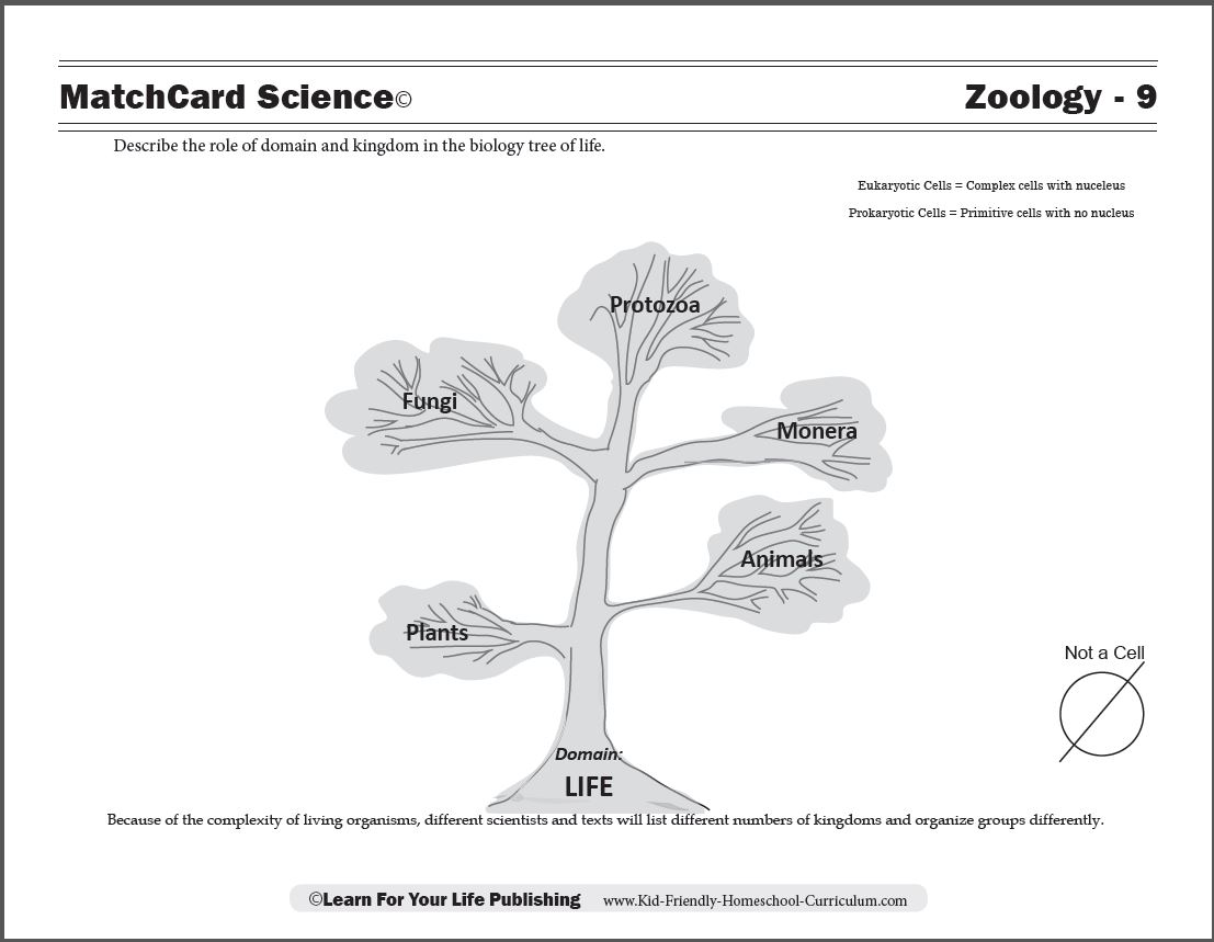 hight resolution of Zoology Curriculum