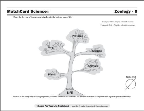 small resolution of Zoology Curriculum