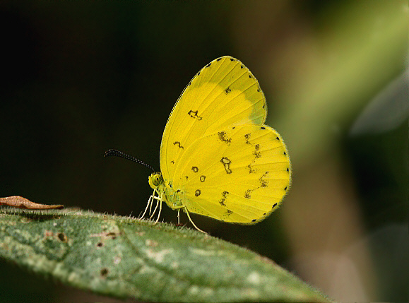 Rainforest Butterflies Names