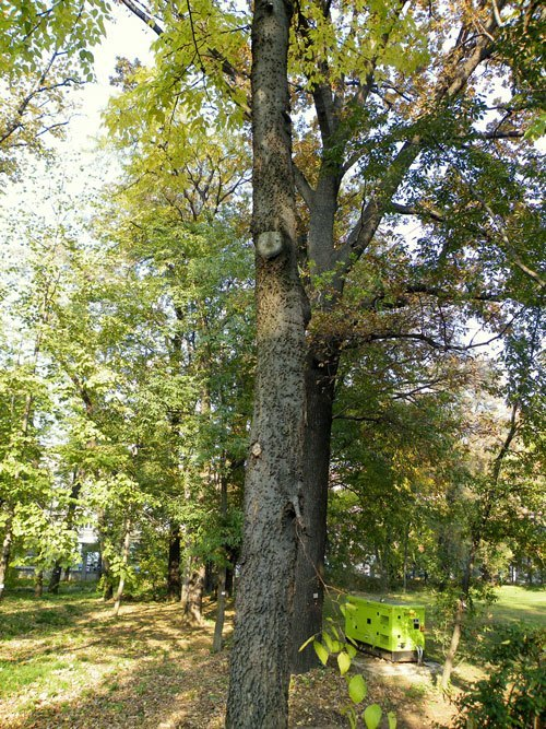 Learn about Nature  American Hackberry  Learn about Nature