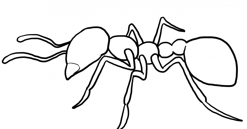 Ant Coloring Page - Learn About Nature