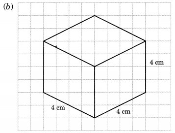 NCERT Solutions for Class 7 Maths Chapter 15 Visualising Solid Shapes Ex 15.2 14