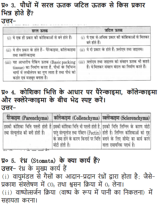 NCERT Solutions for Class 9 Science Chapter 6 Tissues Hindi Medium 5