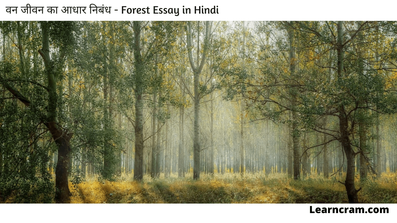 Forest Essay in Hindi