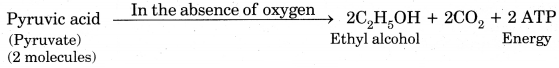 Life Processes Class 10 Extra Questions with Answers Science Chapter 6 11
