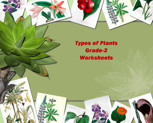 small resolution of Get Types Of Plants Background – expositoryessaywriting.com