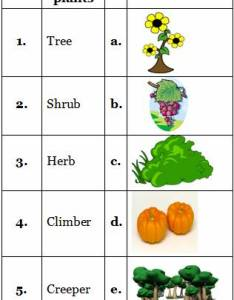 Match the types of plants with their examples also practice sheets for science grade cbse rh learnersplanet