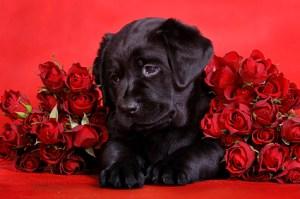 2-14-14-valentine-dogs6