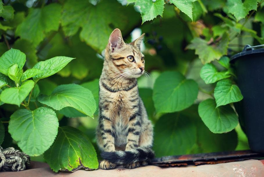 Cat sitting in the garden