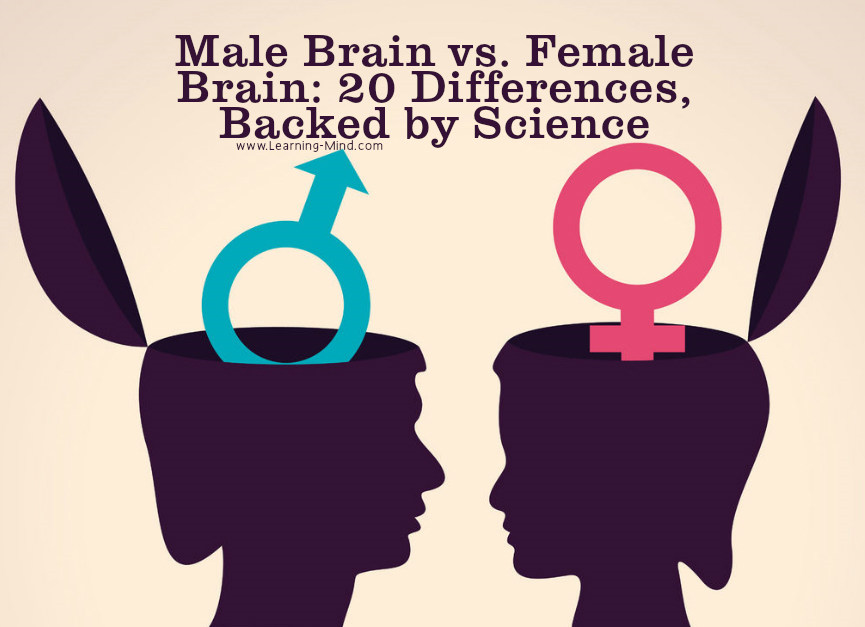 Male Brain Vs Female Brain 20 Differences Backed By Science