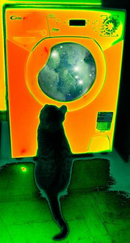 cat psychedelic vision