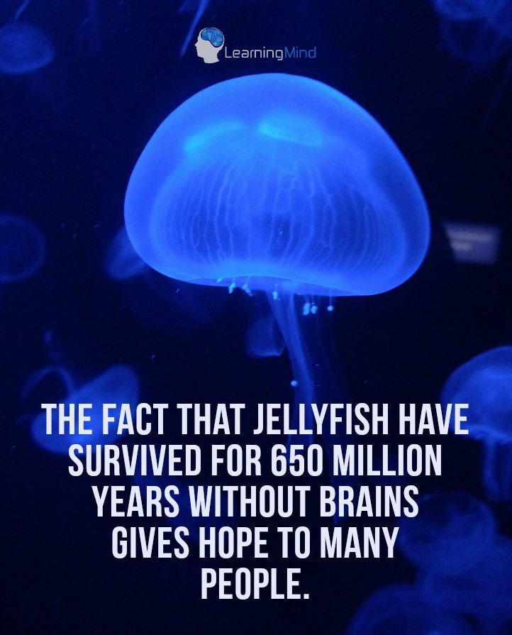 The fact that jellyfish have survived for 650 million years without brains gives hope to many people