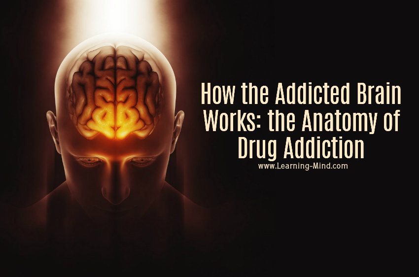 the addicted brain drug addiction
