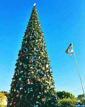 Holiday Christmas tree at Disneyland
