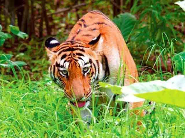 Animal-treatment-methods