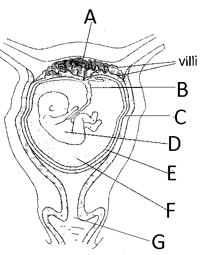 BIOLOGY FORM THREE TOPICAL EXAMINATIONS